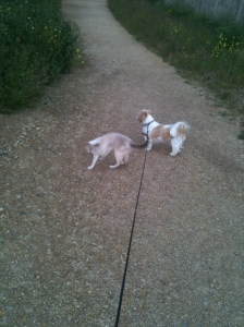 dog & cat walk